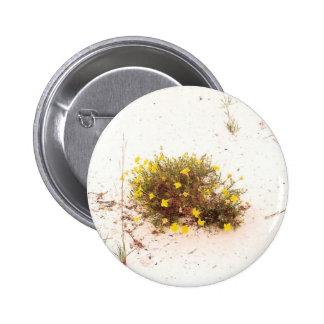 Yellow Wildflowers in White Sand Pins