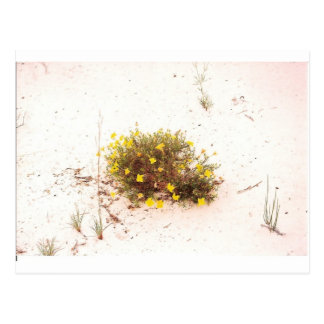 Yellow Wildflowers in White Sand Postcard