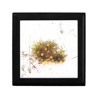 Yellow Wildflowers in White Sand Small Square Gift Box