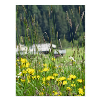 Yellow wildflowers on the meadow postcard