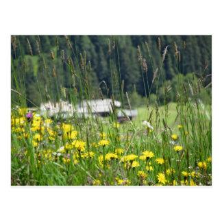 Yellow wildflowers on the meadow postcard
