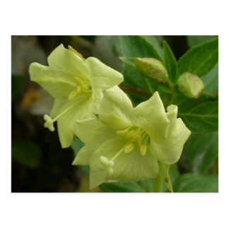 Yellow Willowherb Blossoms, Unalaska Island Postcard