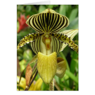 Yellow Zebra Stripes Orchid Card