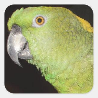 Yellownape Amazon Square Sticker