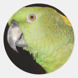 Yellownape Amazon Round Stickers