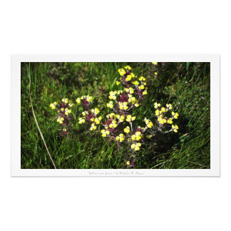 """""""Yellows and Grass,"""" Floral Decor Photograph"""