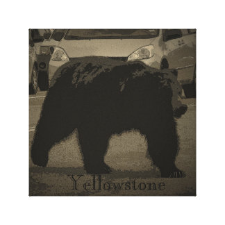 Yellowstone Bear Wrapped Canvas Stretched Canvas Print