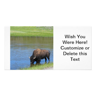 Yellowstone Bison Drinking in Lake Personalized Photo Card