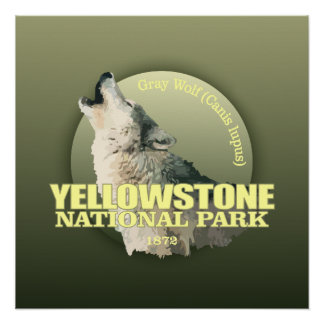 Yellowstone NP (Gray Wolf) WT Poster