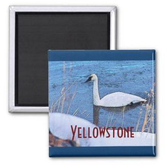 Yellowstone Swan Magnet
