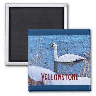 Yellowstone Swan Magnet