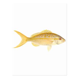 Yellowtail Snapper Logo Postcard