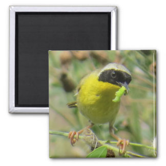 Yellowthroat Magnet