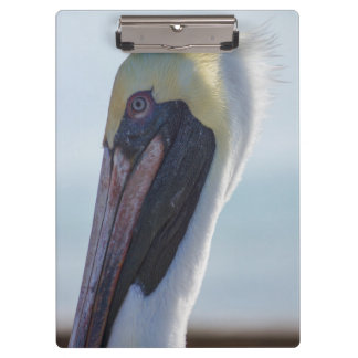 Yes I'm Gorgeous Clipboard