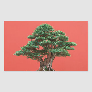 Yew bonsai rectangular sticker