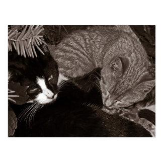 Yin Yang Cats Postcard
