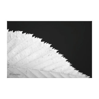 Ying Yang Leaf Canvas Print