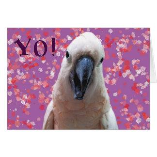 YO! CARD