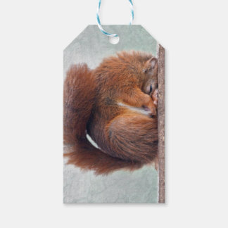Yoga Squirrel Gift Tags
