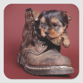 Yorkie and boot square sticker