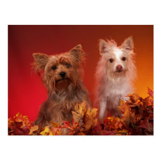 Yorkie and Friends Postcards
