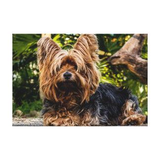 Yorkie dog canvas