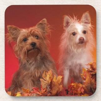 Yorkie in Autumn Coasters
