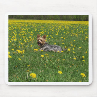 Yorkie in the spring mousepads