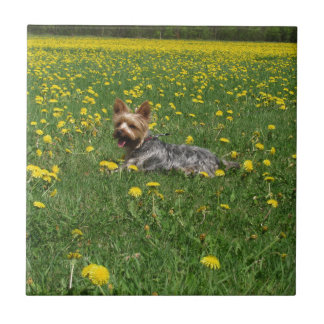 Yorkie in the spring small square tile