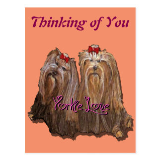 Yorkie Love Collection Postcard