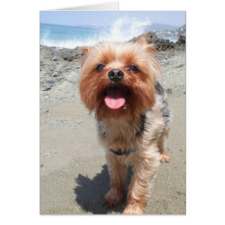 yorkie misses you card