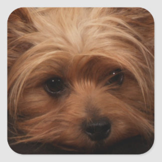 Yorkie or Your Dog Picture Square Sticker