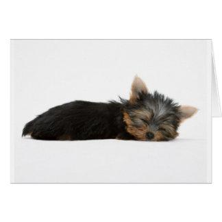 Yorkie Puppy Sleeping Greeting Card