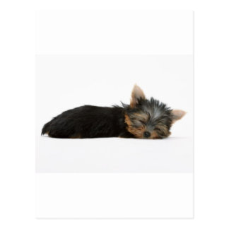 Yorkie Puppy Sleeping Postcard