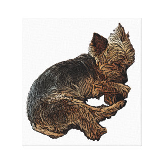Yorkie Sleeping Canvas Print