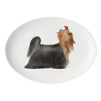 Yorkie stands on white porcelain serving platter