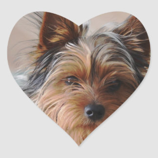 Yorkie Terrier  Sticker