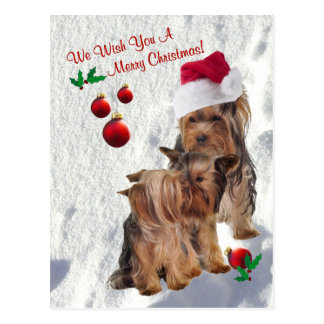 Yorkie We Wish You A Merry Christmas Postcard 2
