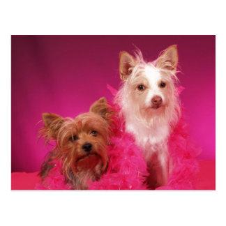 Yorkies and Pink Boas Postcard