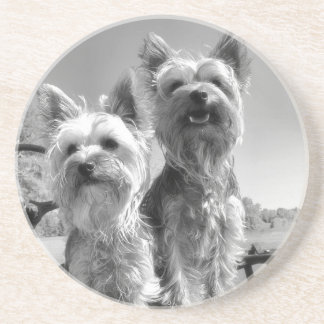 Yorkshire Terrier Black and White Coaster