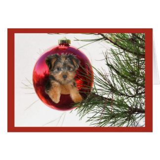 Yorkshire Terrier Christmas Card Ball Hanging