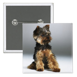 Yorkshire terrier, close-up 15 cm square badge