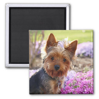 Yorkshire Terrier dog beautiful photo magnet