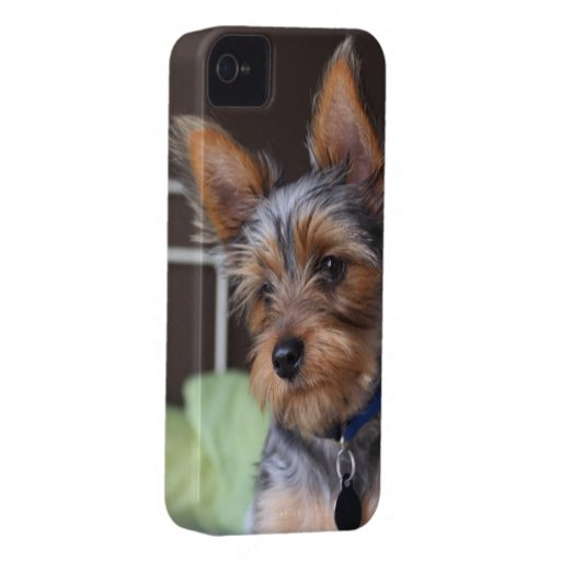 Yorkshire Terrier dog cute blackberry bold case iPhone 4 Case