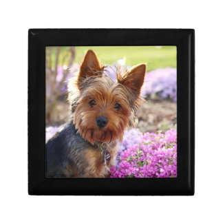 Yorkshire Terrier dog  jewelry box, trinket box