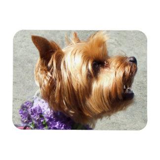 Yorkshire Terrier dog Magnet