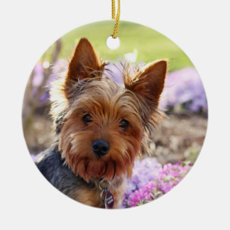 Yorkshire Terrier dog photo hanging ornament