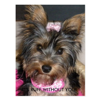 Yorkshire Terrier IT S RUFF WITHOUT YOU Post Card