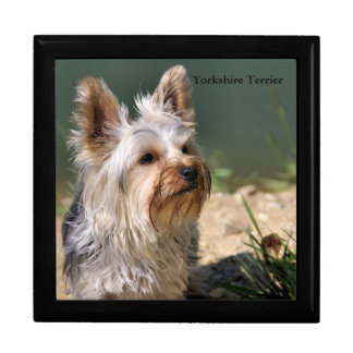 Yorkshire Terrier Large Square Gift Box