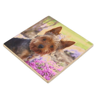 Yorkshire Terrier Maple Wood Coaster